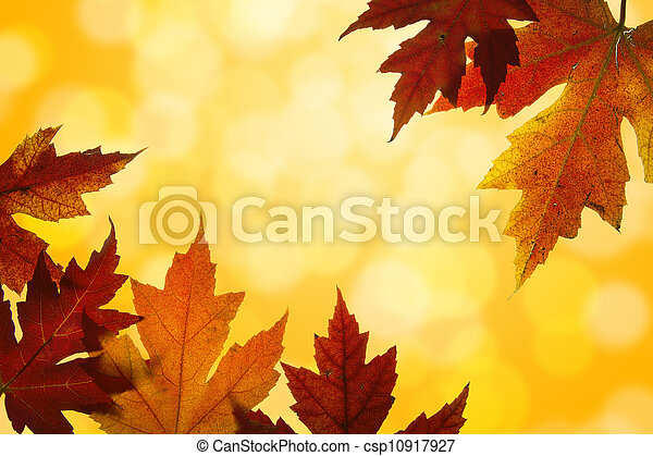 Autumn Maple Leaves Mixed Fall Colors Backlit - csp10917927