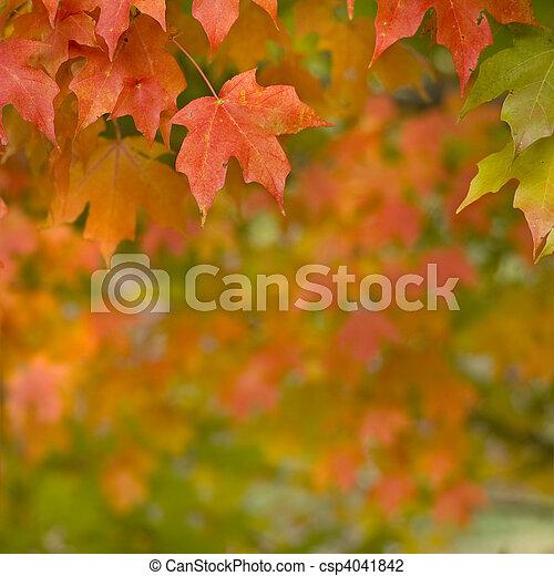 Autumn Maple Leaves  - csp4041842