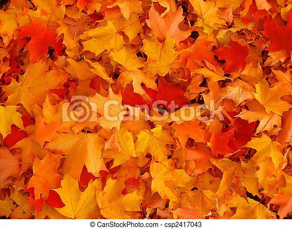 Autumn, maple leaves. - csp2417043