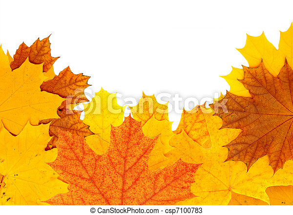 Autumn maple leaves - csp7100783