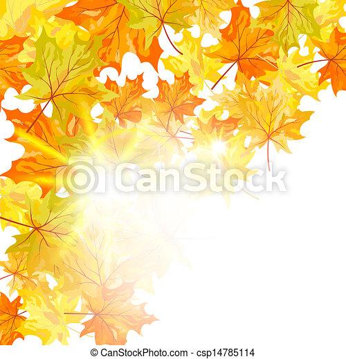 Autumn maple leaves  - csp14785114