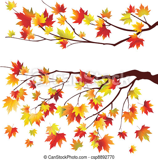 Autumn maple tree branches - csp8892770