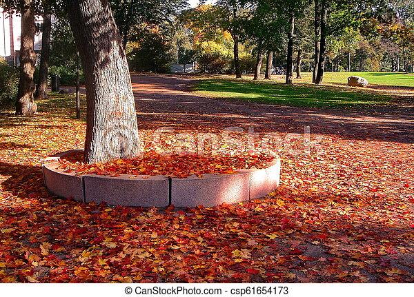 autumn maple trees in fall city park - csp61654173