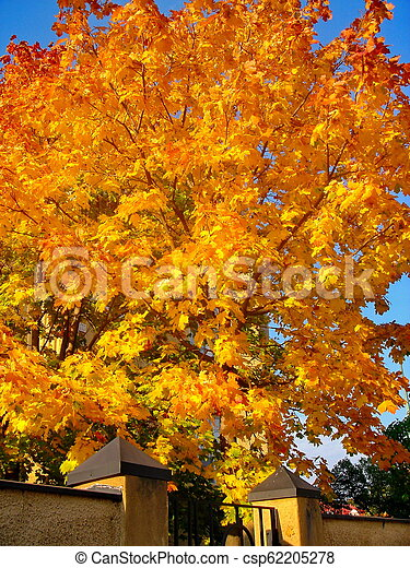 autumn maple trees in fall city park - csp62205278