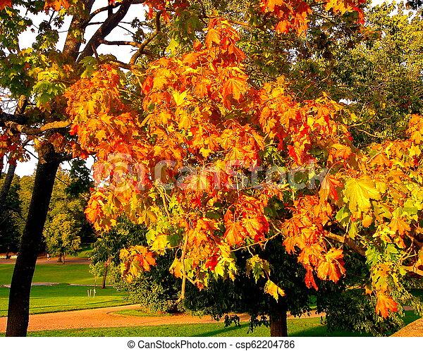 autumn maple trees in fall city park - csp62204786