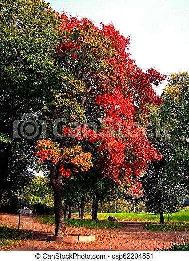 autumn maple trees in fall city park - csp62204851