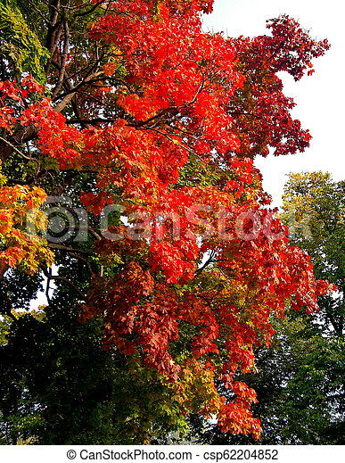 autumn maple trees in fall city park - csp62204852