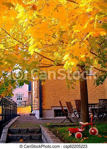 autumn maple trees in fall city park - csp62205223