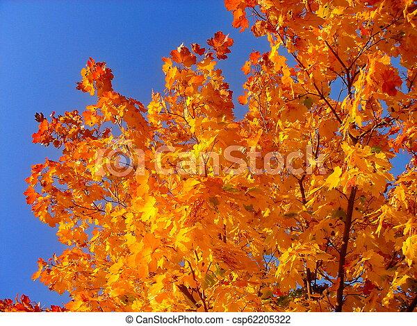 autumn maple trees in fall city park - csp62205322