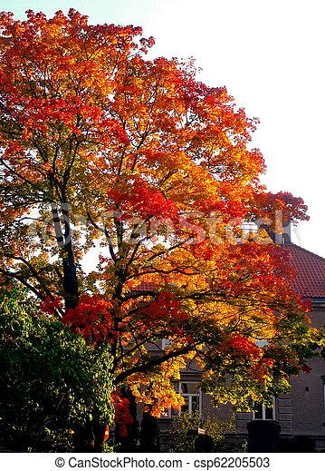 autumn maple trees in fall city park - csp62205503