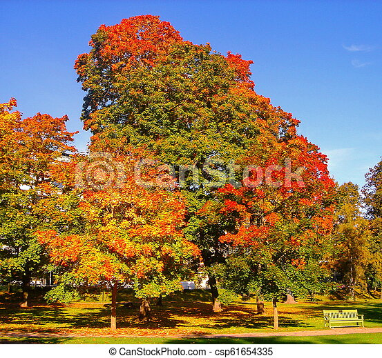 autumn maple trees in fall city park - csp61654335