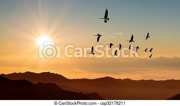 Autumn migration of cranes panoramic view - csp32178211