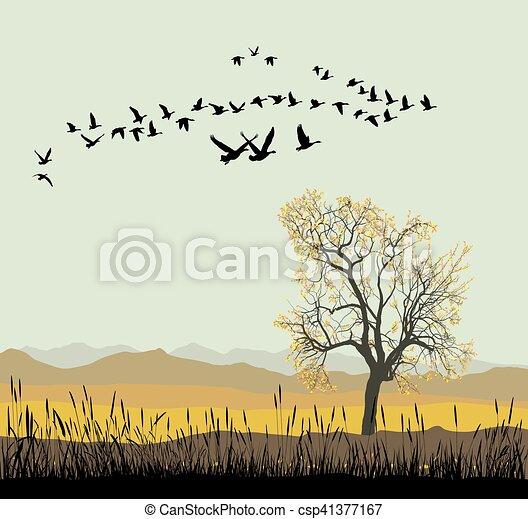 Autumn migration of wild geese - csp41377167