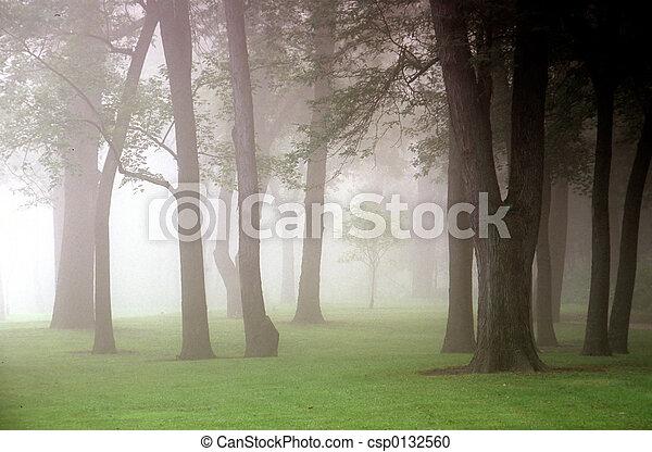 autumn mist - csp0132560