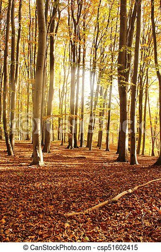 autumn morning forest with leaves - csp51602415