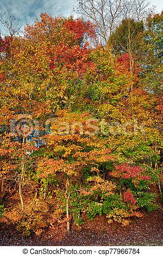 Autumn Morning Glory - csp77966784