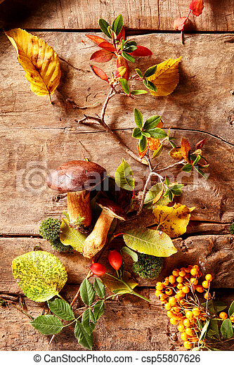 Autumn or fall forest harvest - csp55807626