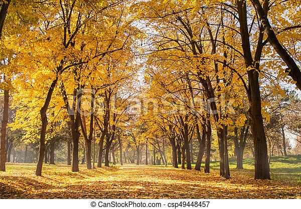 Autumn park scene of a path in fallen leaves - csp49448457