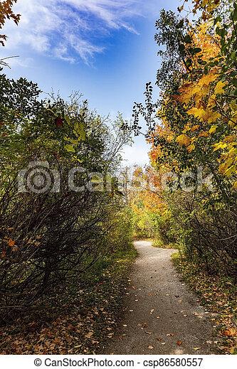 Autumn path in the park area - csp86580557