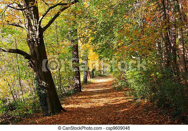 Autumn Path - csp9609048