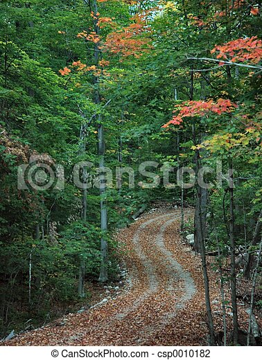 Autumn Path - csp0010182