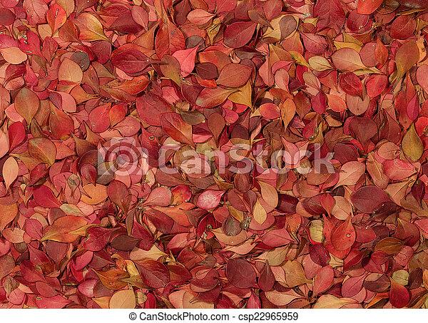 Autumn pattern. Barberry - csp22965959