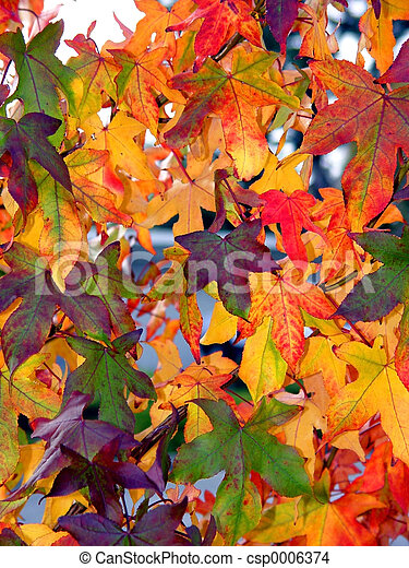 Autumn pattern - csp0006374