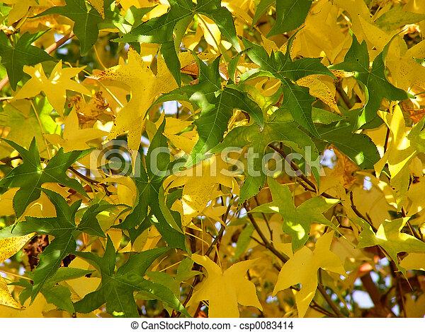 Autumn pattern - csp0083414