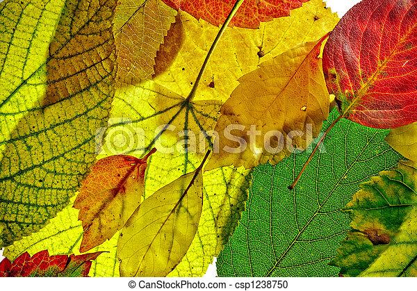 Autumn pattern - csp1238750