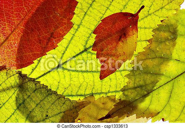 Autumn pattern - csp1333613