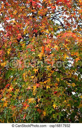 Autumn pattern                              - csp16817932