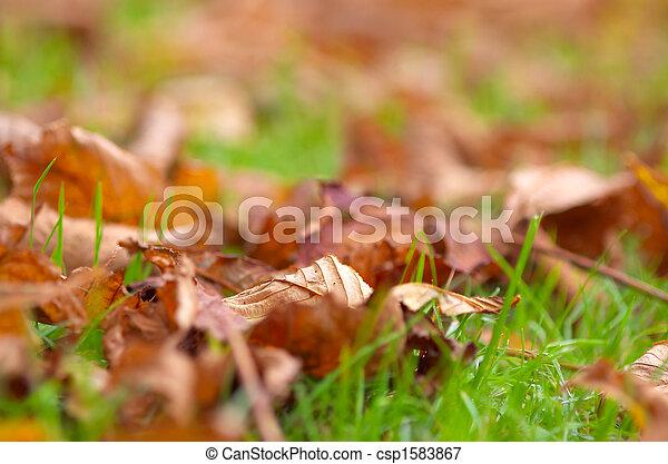 autumn - csp1583867