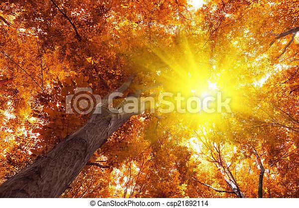 autumn - csp21892114