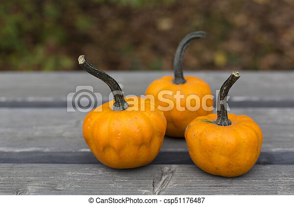 Autumn pumpkins on the gray wood in the park - csp51176487