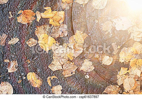 Autumn rain in the park - csp61637897