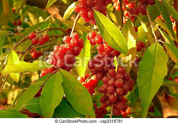 Autumn Red Berries Autumn Ripe Sea Buckthorn Berries