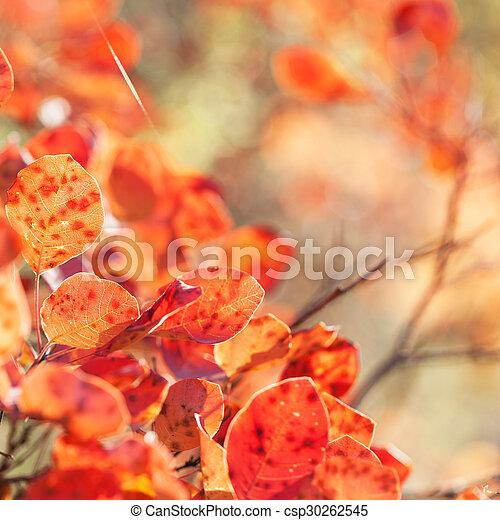 Autumn red leaves - csp30262545