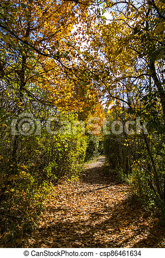 Autumn road in the city forest park - csp86461634