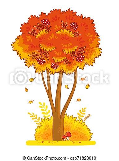 Autumn rowan tree on a white background. - csp71823010