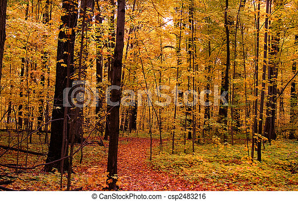 Autumn Scene In A Park - csp2483216