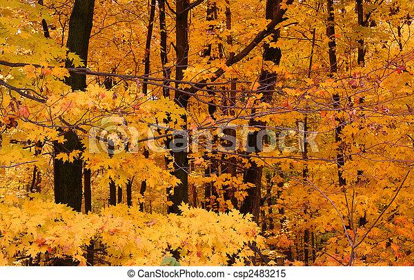 Autumn Scene In A Park - csp2483215