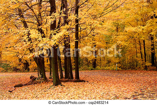Autumn Scene In A Park - csp2483214