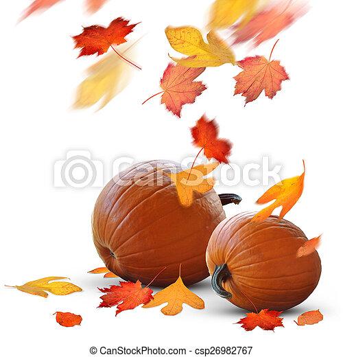 Autumn scene of ripe pumpkins - csp26982767