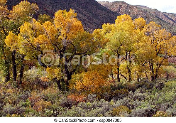 Autumn scene - csp0847085