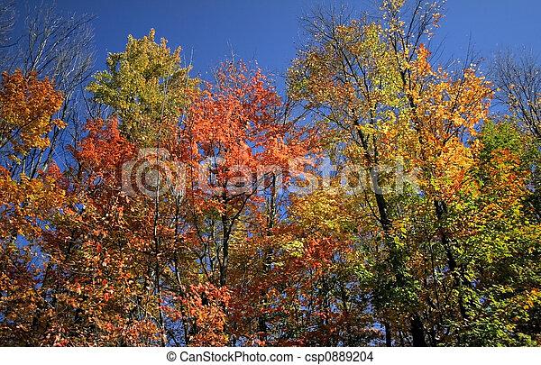Autumn Scene  - csp0889204