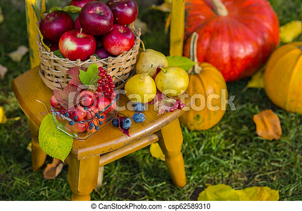 Autumn scene with plants, pumpkins, apples in a wicker basket, ceramic pots, wooden chair, vintage style, composition in the garden. - csp62589310