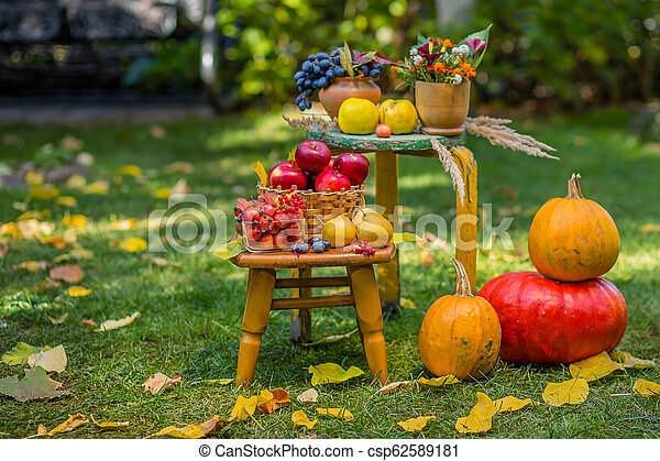 Autumn scene with plants, pumpkins, apples in a wicker basket, ceramic pots, wooden chair, vintage style, composition in the garden. - csp62589181