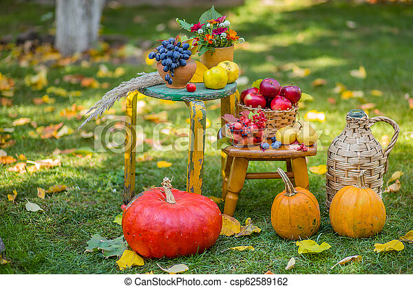Autumn scene with plants, pumpkins, apples in a wicker basket, ceramic pots, wooden chair, vintage style, composition in the garden. - csp62589162