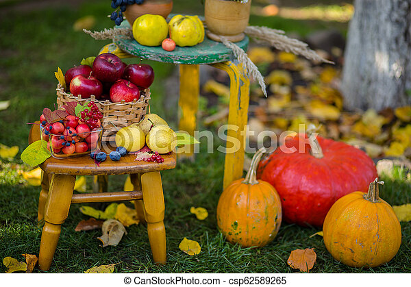 Autumn scene with plants, pumpkins, apples in a wicker basket, ceramic pots, wooden chair, vintage style, composition in the garden. - csp62589265