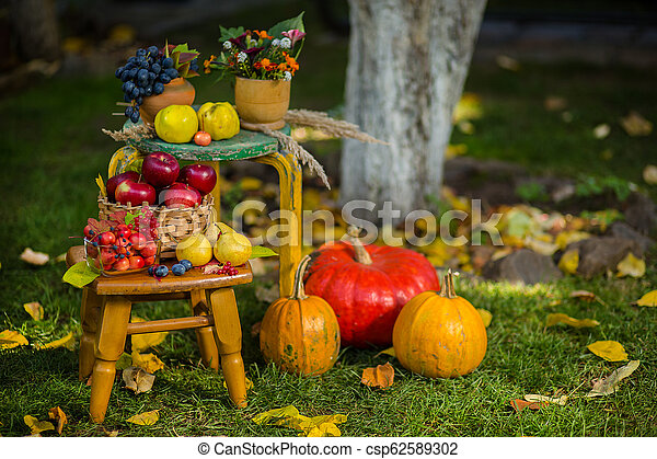 Autumn scene with plants, pumpkins, apples in a wicker basket, ceramic pots, wooden chair, vintage style, composition in the garden. - csp62589302